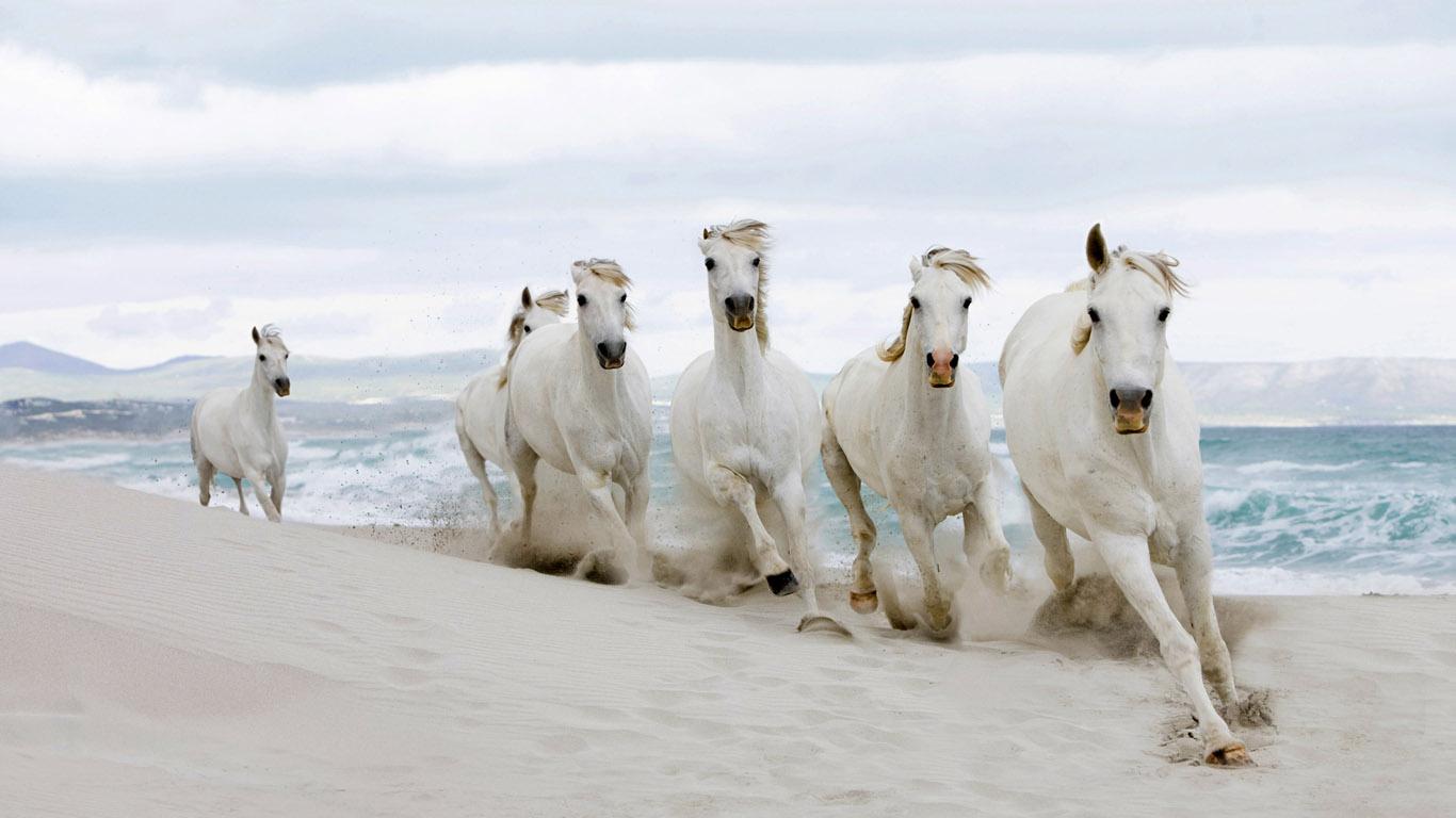 Черно белые обои 252 животные обои 1366х768