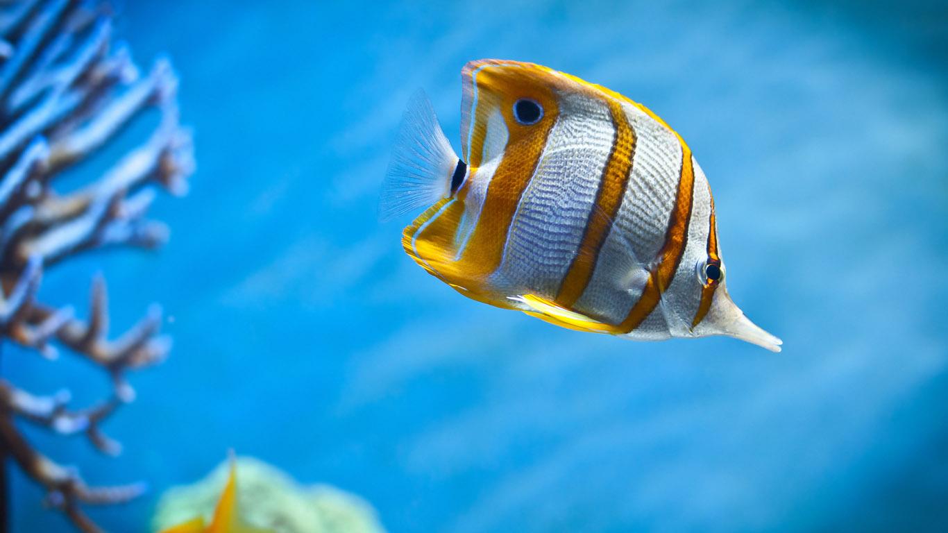 обои рыбы:
