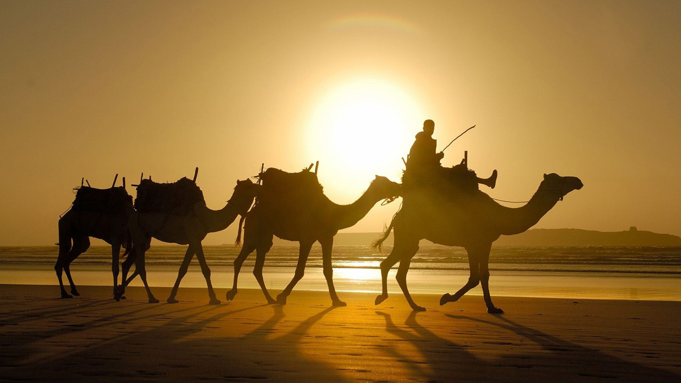 http://1366x768.ru/animal/81/camel-wallpaper-1366x768.jpg