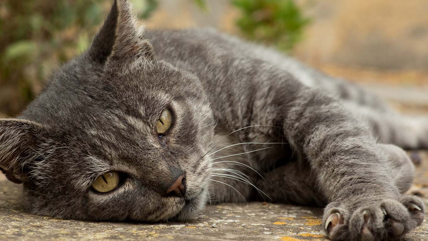 Кошки, котята - обои 1366х768 на рабочий ...: www.1366x768.ru/cat-1.php