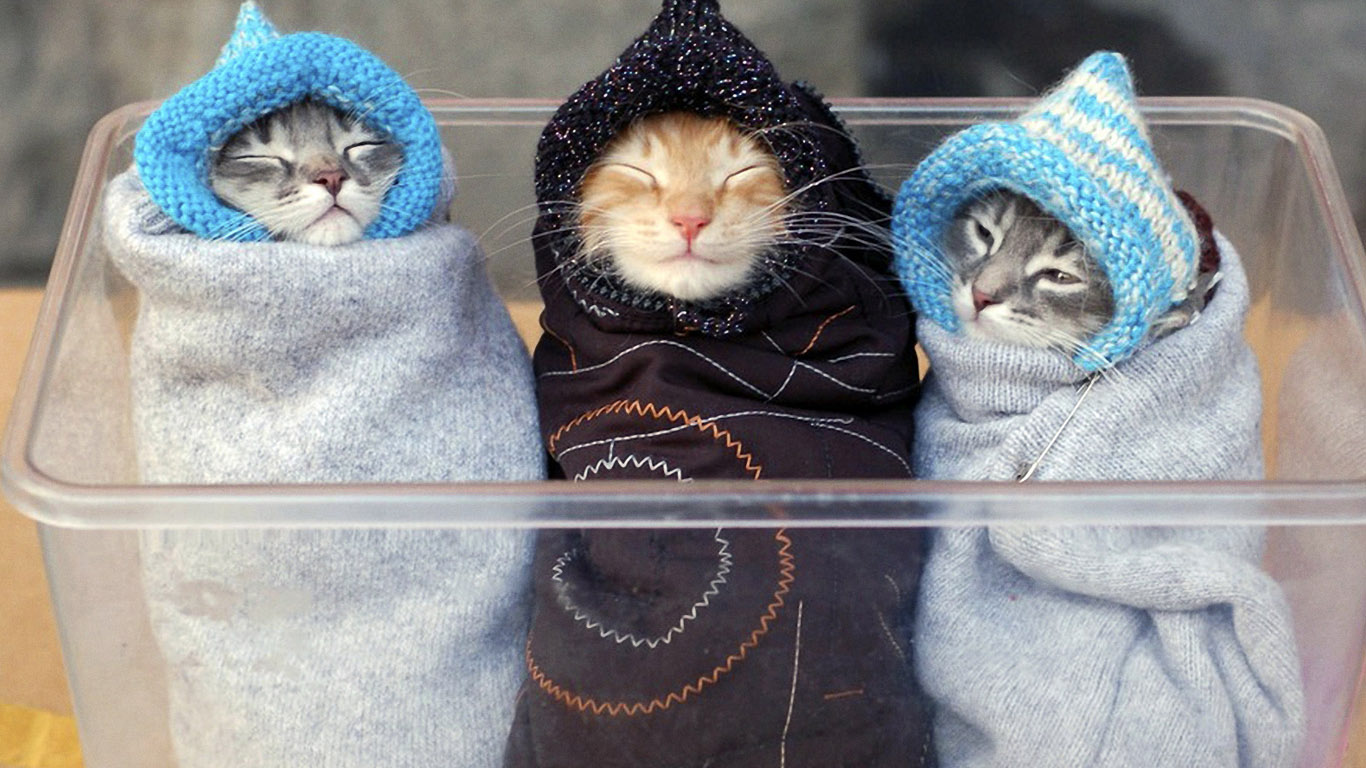 http://1366x768.ru/cat/41/funny-kittens-wallpaper-1366x768.jpg