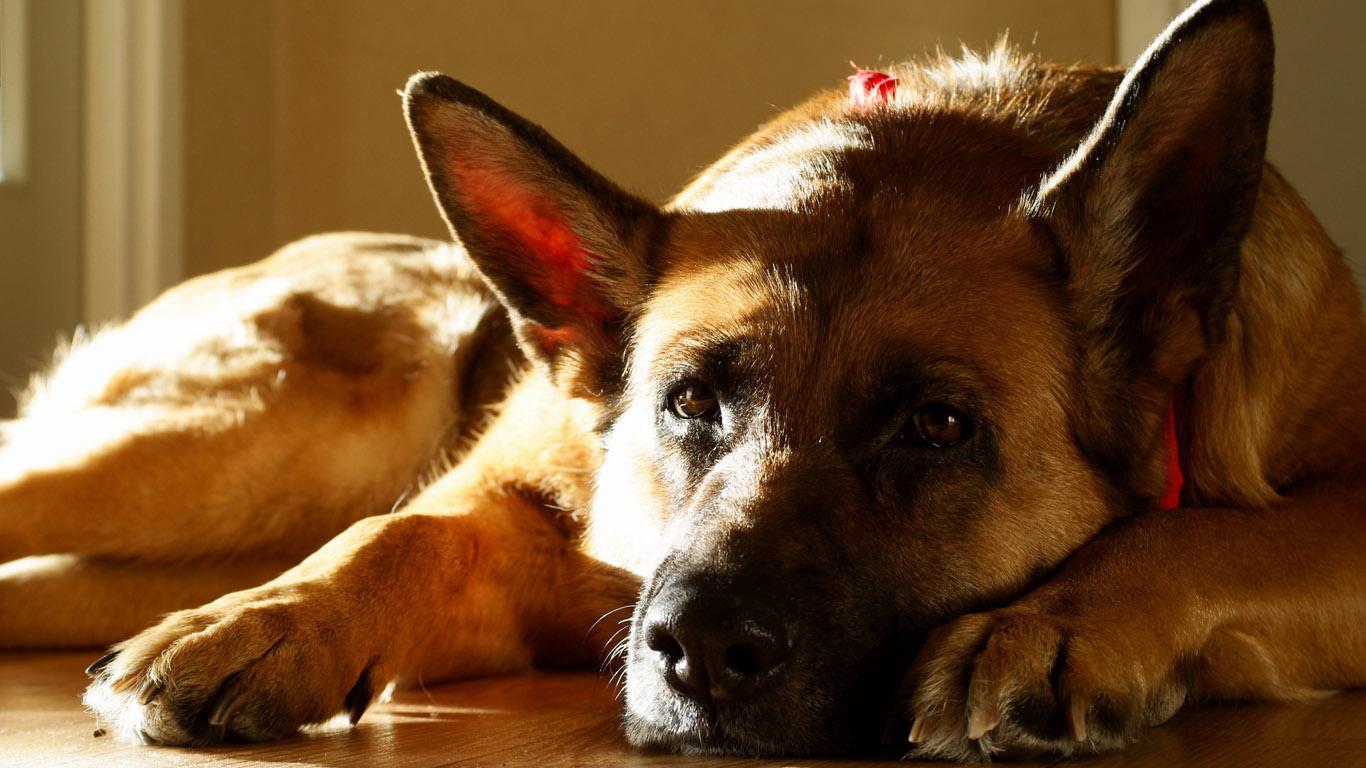 фото собак на заставку