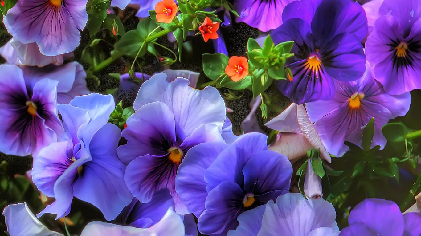 самолете картинки на рабочий стол цветы фиалки происходит из-за