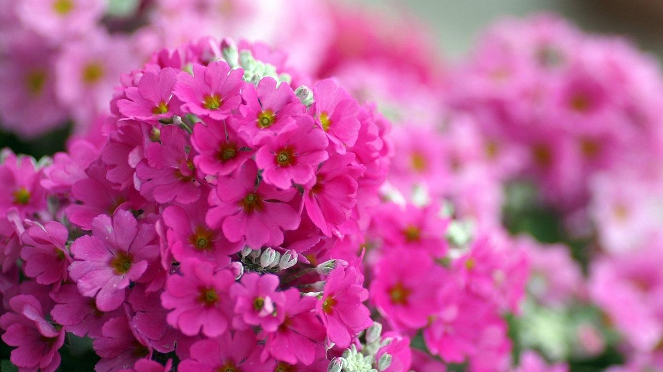 Картинки цветы красивые 1366х768