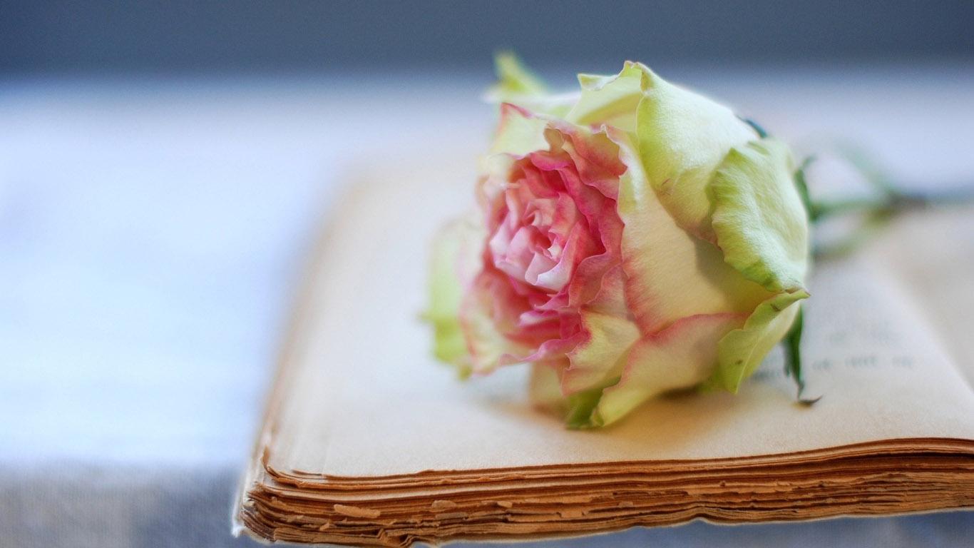http://www.1366x768.ru/flower/197/197-cvetok-kniga-oboi-cvety-1366x768.jpg