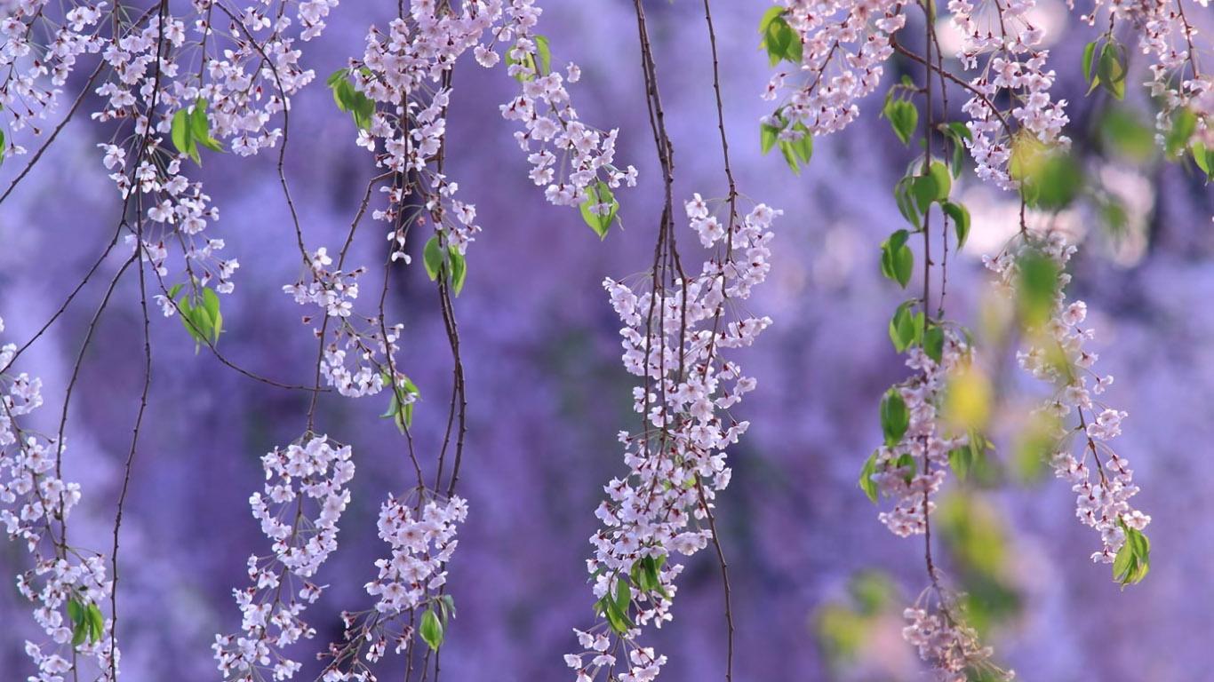 обои для рабочего стола природа и цветы скачать