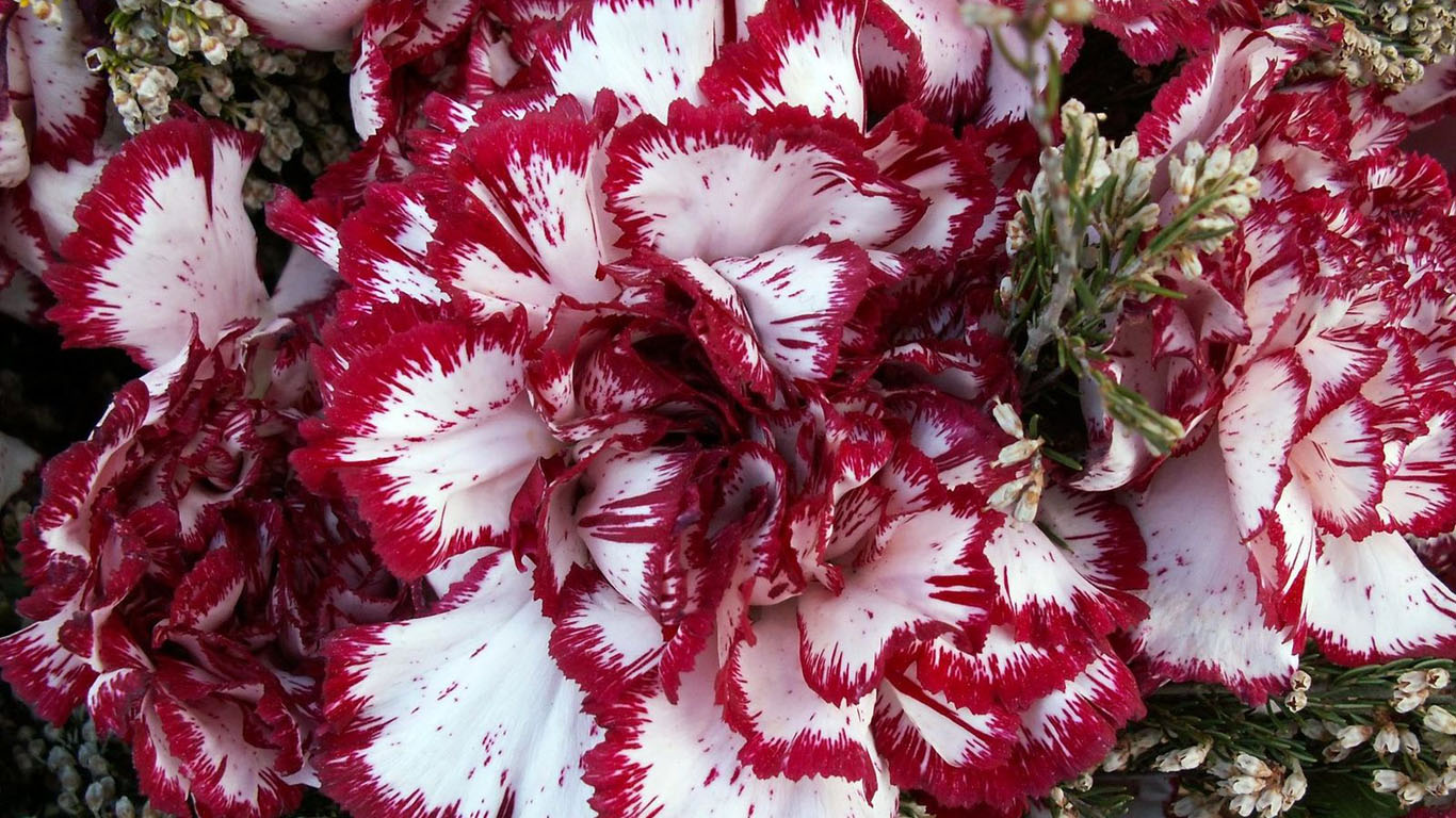 Цветы фото на рабочий