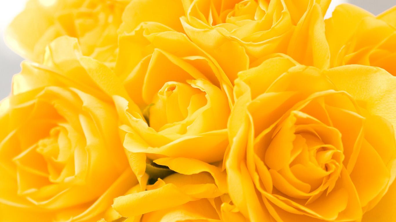 Интерьер обои с цветами