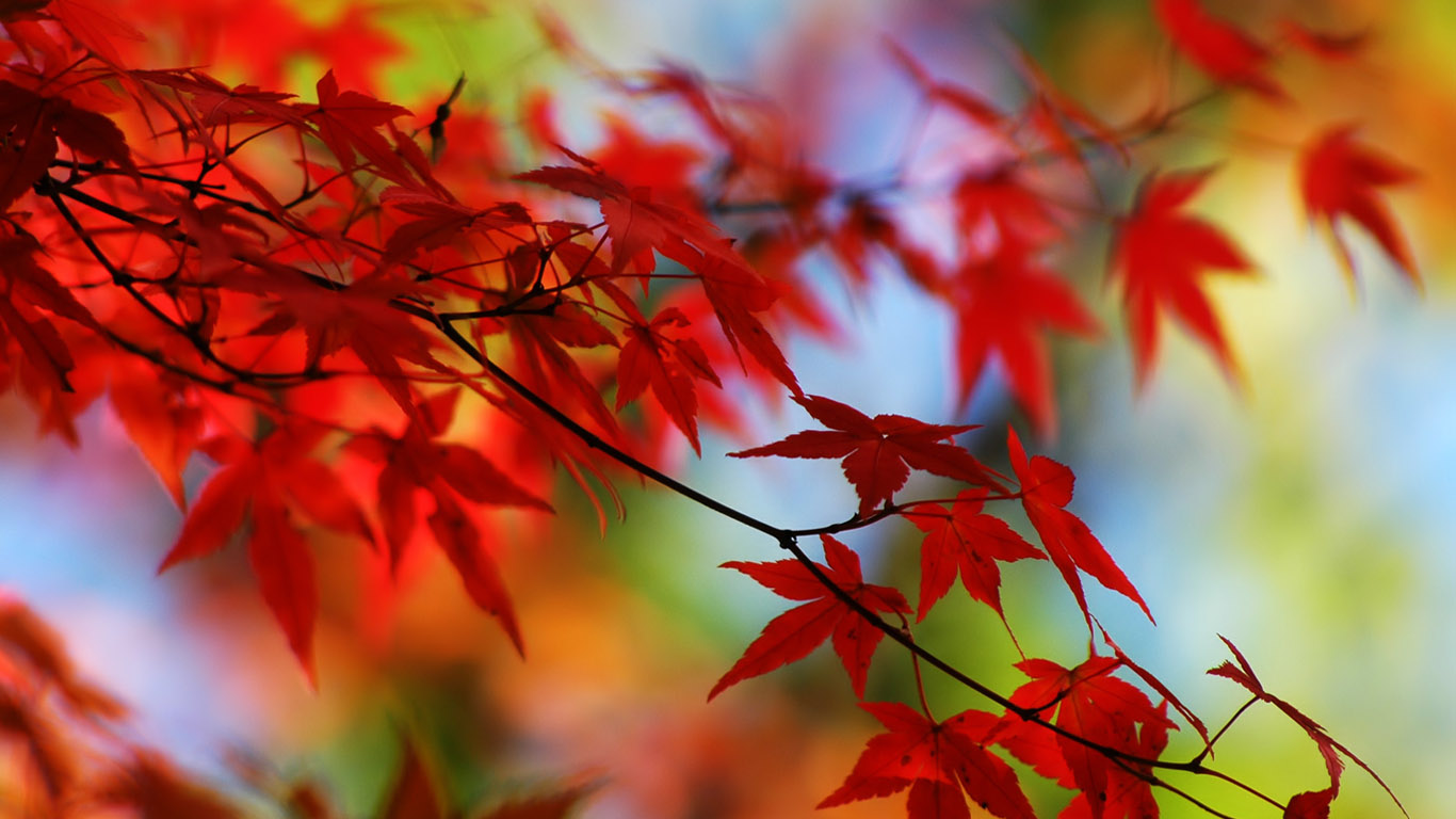 заставка на рабочий стол осень фото