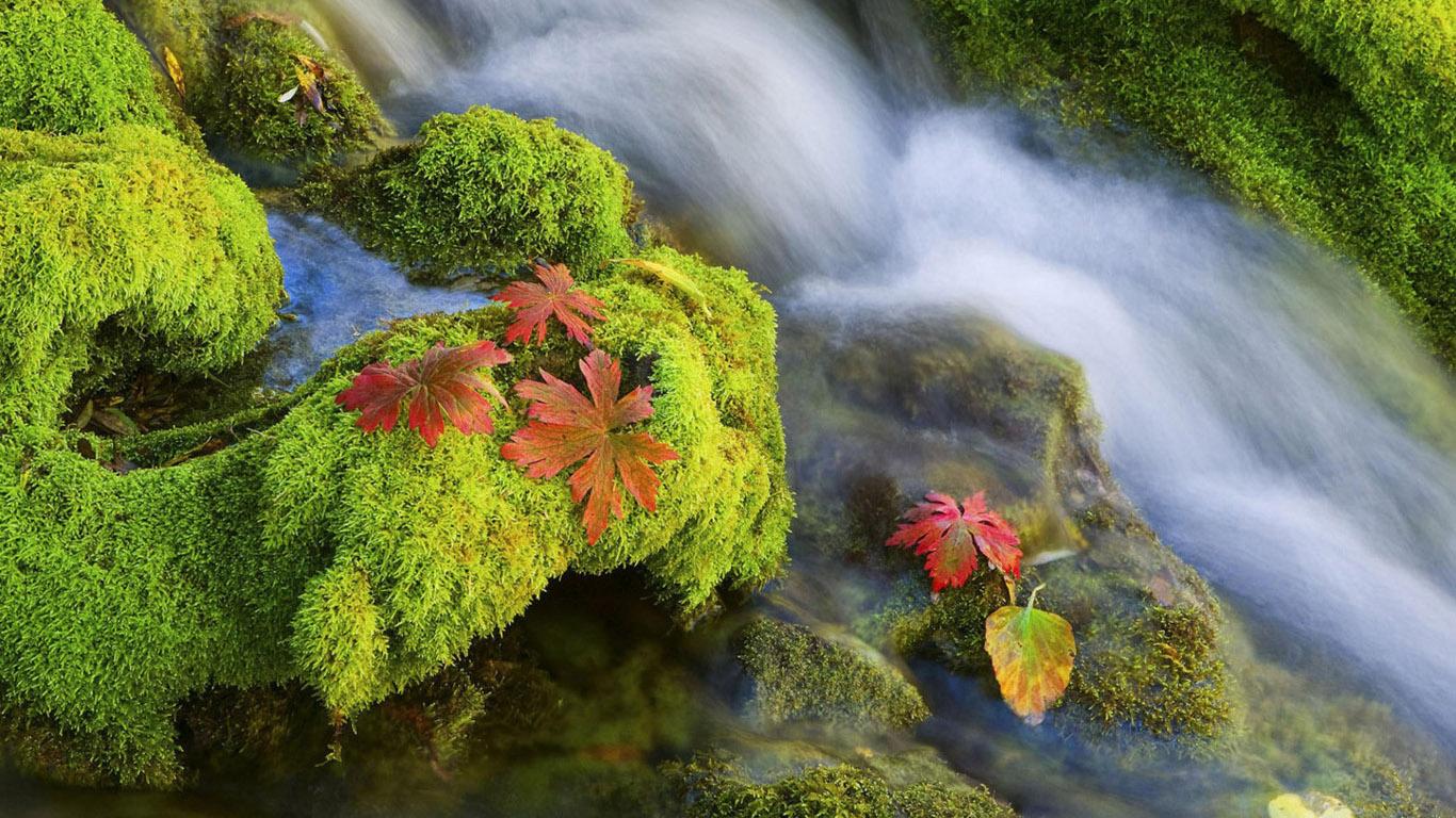 обои на рабочий стол кленовые листья осенью 14829