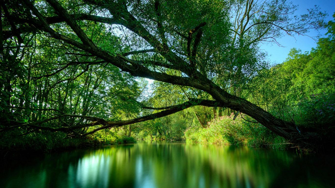 Качать картинки для рабочего стола 1366х768 природа