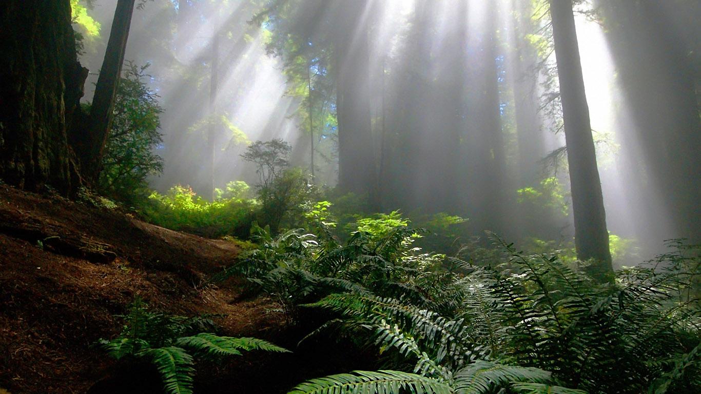 Природа - обои 1366х768 на рабочий стол: www.1366x768.ru/nature-30.php